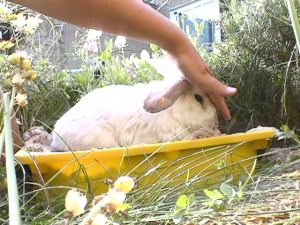Bunnies June 2003 066