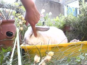 Bunnies June 2003 067