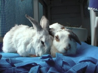 bunnies-november-2003-378