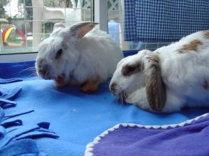 Bunnies November 2003 459