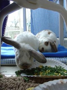 Bunnies November 2003 466