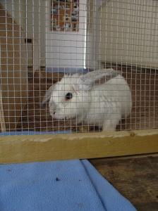 Bunnies October 2003 060