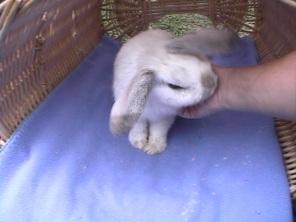Bunnies September 2003 062