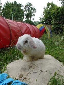 Bunny photos 302
