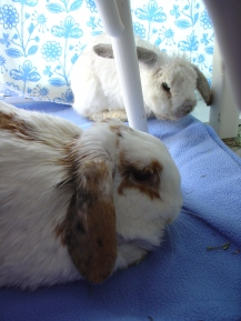 Rabbit photos 186