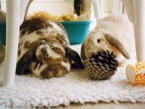 spok-ayosha-on-fleece-rug-with-pine-cone
