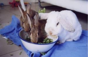 Wild bunnies and Sweetpea