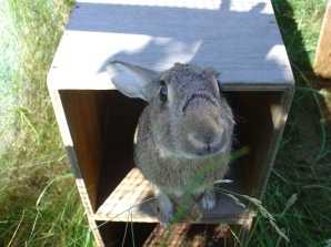 Bunny photos 134