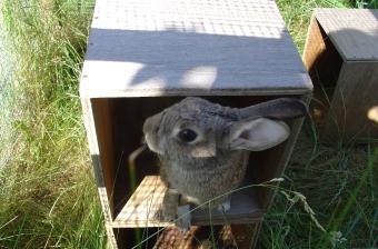 Bunny photos 144