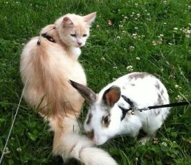 international-rabbit-day-cats-01