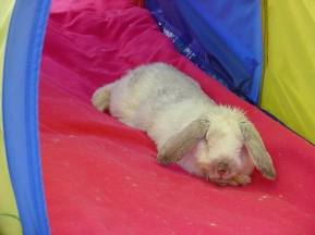 Rabbit photos 163
