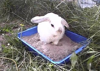 Bunnies July 2003 080