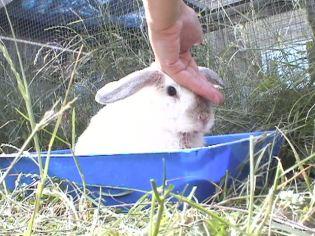 Bunnies June 2003 103