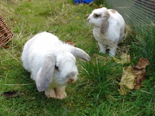 Bunnies November 2003 350