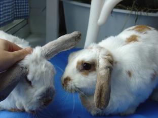 bunnies-november-2003-403