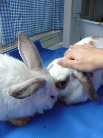 bunnies-november-2003-423