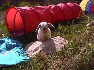 Bunny photos 216