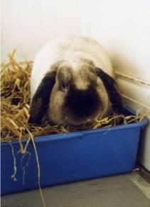 bunny111.jpg