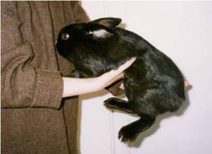 hold-bunny