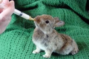 rabbit_feeding