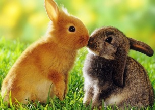 2-rabbs-kiss-not-BH