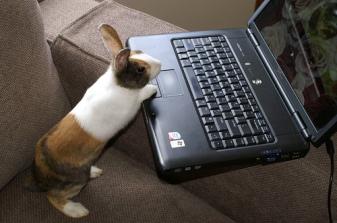 bunny-computer (1)