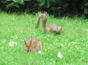 bunny-squirrel-hanging-out-230037