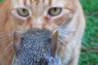 cat_vs_squirrel