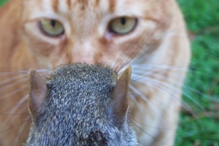 cat_vs_squirrel
