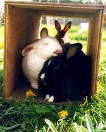 foster bunnies