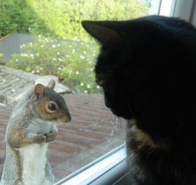 funny-animals-squirrel-and-cat