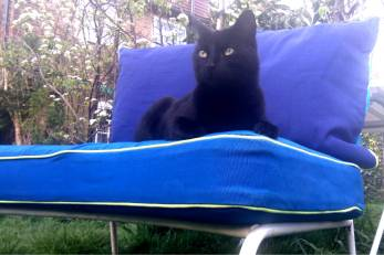 Meow on garden chair 2