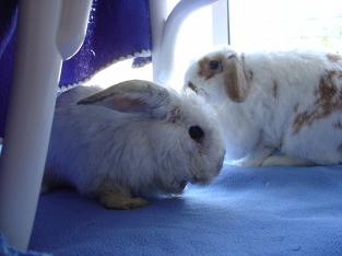 rabbit-photos-069
