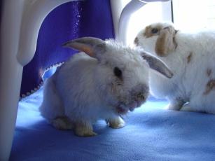 rabbit-photos-075