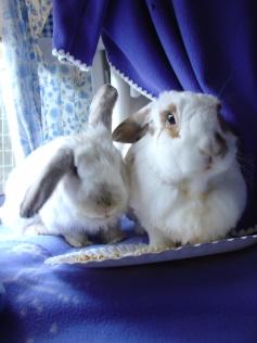 rabbit-photos-107