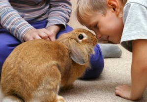 rabbit_digging_in_carpet.jpg