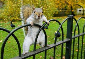 squirrel-638282