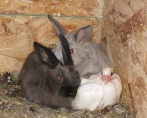 40ff311a_53414_bunnies_and_birds_1