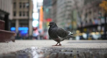 our_misguided_hatred_for_pigeons_OG-750x410