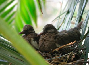 pigeons_nest_v__by_greeneyeluv