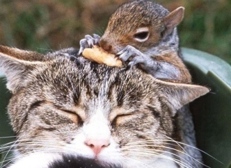 1.-A-cat-and-a-squirrel