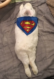 Superbunny-Takes-a-Break-from-Fighting-Crime-1