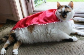 Top-10-Cats-Who-Want-To-Be-Superheroes-10