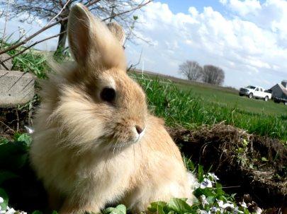 Beautiful-Urban-Rabbit