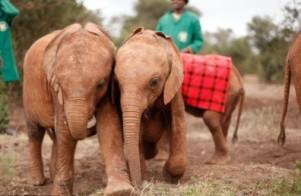 elephant-396x259