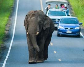 Elephant-430138