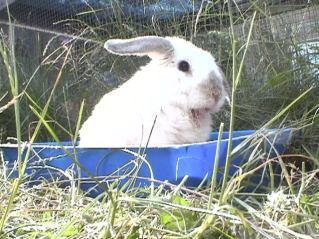 Bunnies June 2003 100
