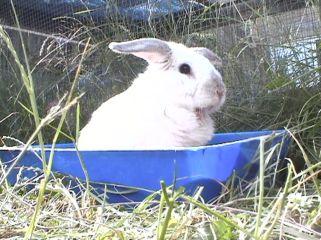 Bunnies June 2003 102