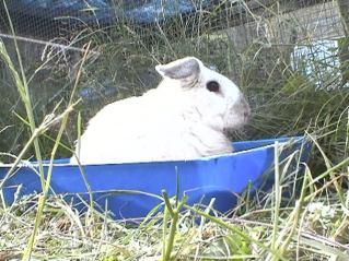 Bunnies June 2003 105