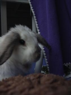 Bunnies November 2003 089
